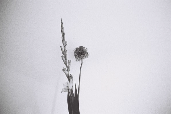 http://www.ellyclarke.com/files/gimgs/18_flowersfromk.jpg