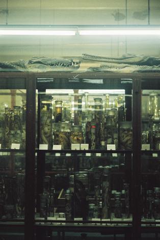 http://www.ellyclarke.com/files/gimgs/18_naturalhistory2_v2.jpg